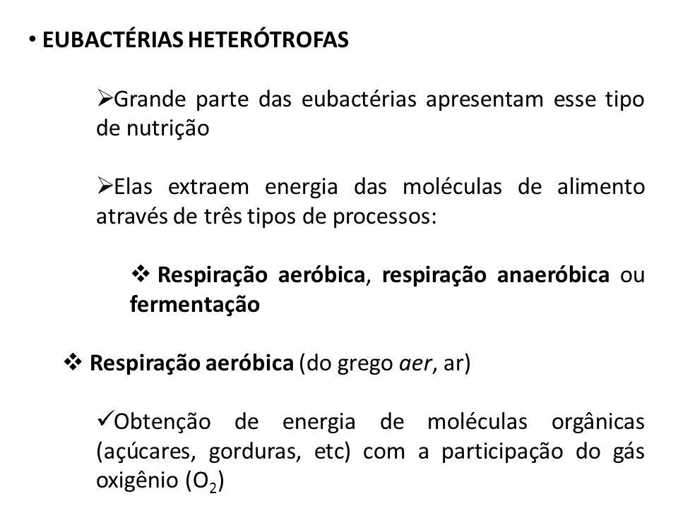 EUBACTÉRIAS HETERÓTROFAS