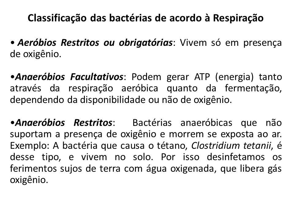 Classificação das bactérias de acordo à Respiração
