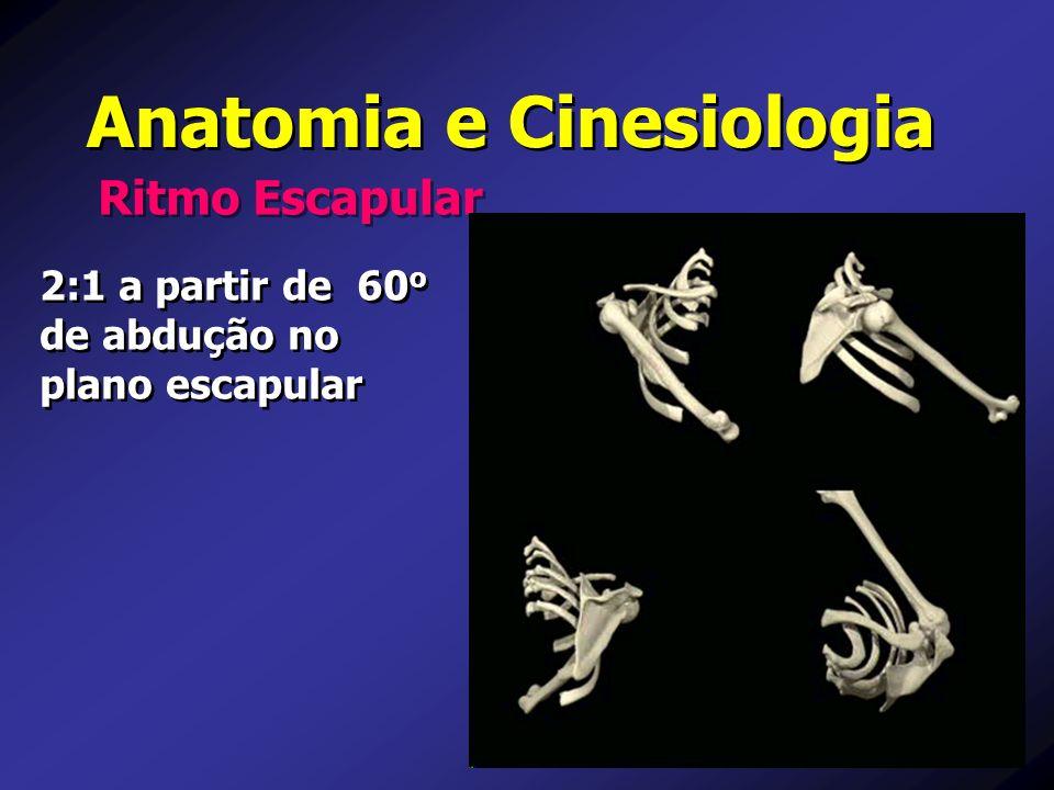 Anatomia e Cinesiologia