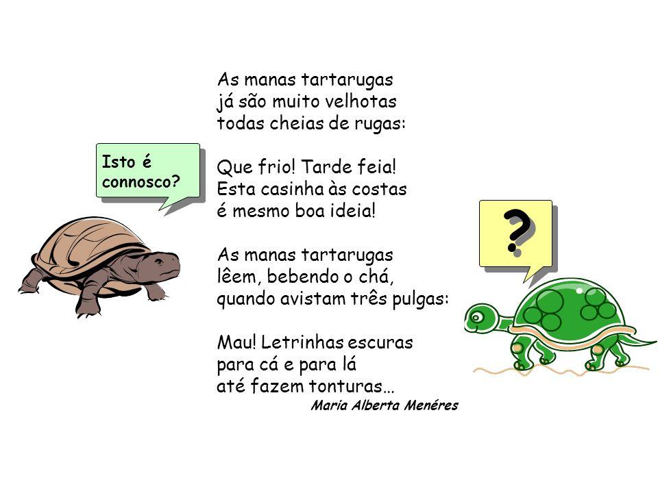 As manas tartarugas já são muito velhotas todas cheias de rugas: