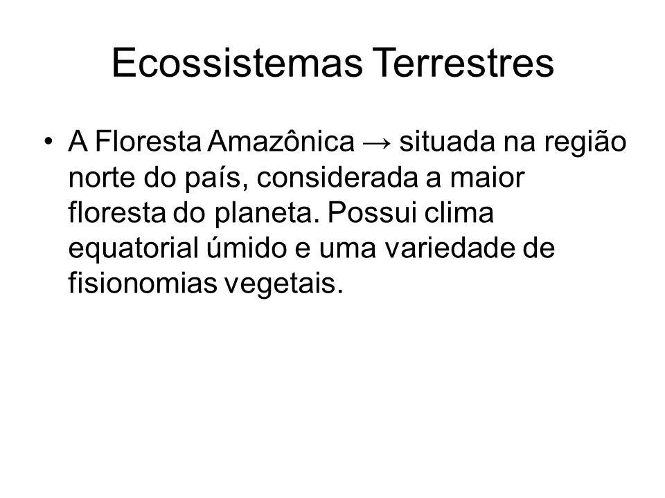 Ecossistemas Terrestres