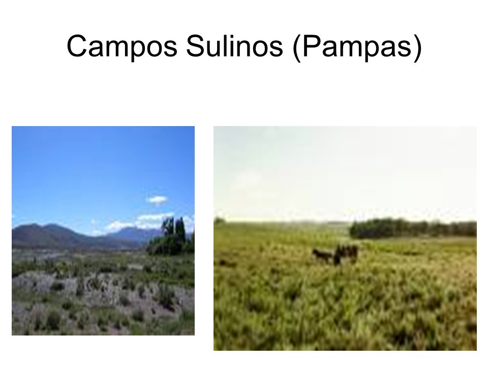 Campos Sulinos (Pampas)