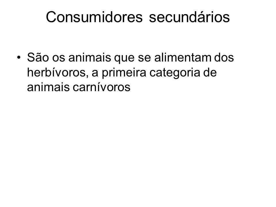 Consumidores secundários