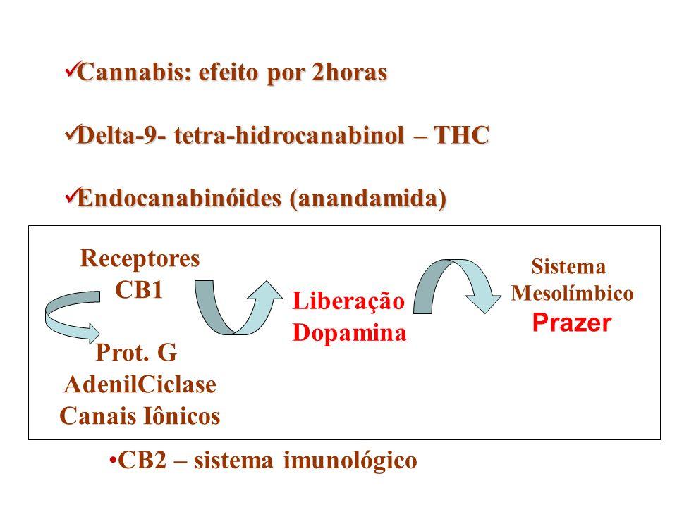Cannabis: efeito por 2horas Delta-9- tetra-hidrocanabinol – THC