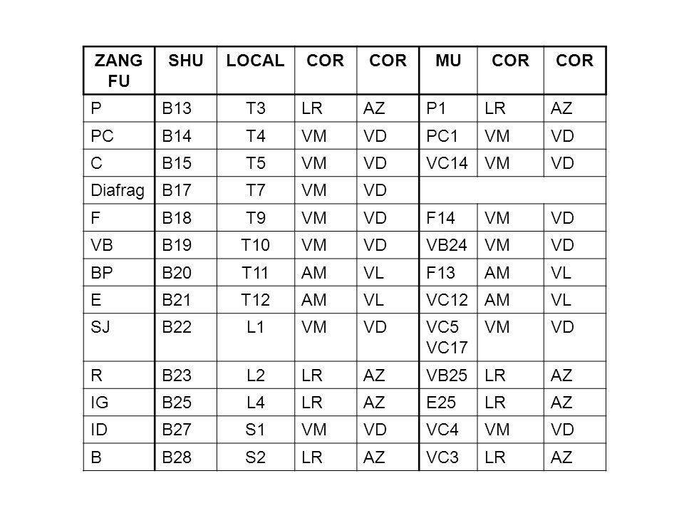 ZANGFU. SHU. LOCAL. COR. MU. P. B13. T3. LR. AZ. P1. PC. B14. T4. VM. VD. PC1. C. B15. T5. VC14. Diafrag.