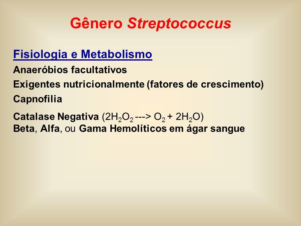 Gênero Streptococcus Fisiologia e Metabolismo Anaeróbios facultativos