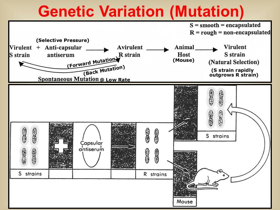 Genetic Variation (Mutation)