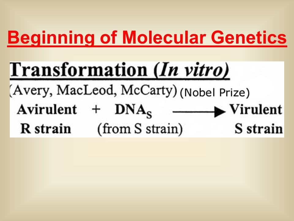 Beginning of Molecular Genetics