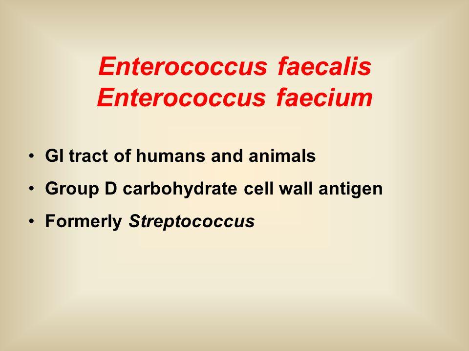 Enterococcus faecalis Enterococcus faecium