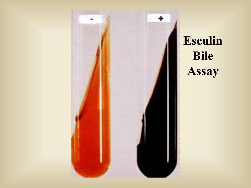 Esculin Bile Assay