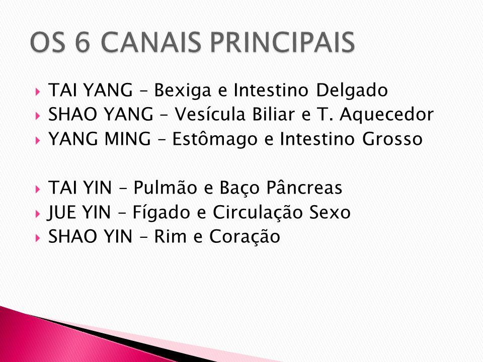 OS 6 CANAIS PRINCIPAIS TAI YANG – Bexiga e Intestino Delgado