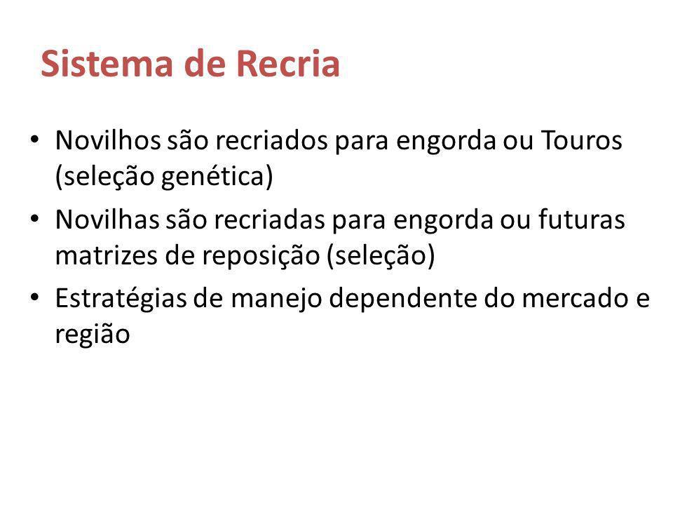 Sistema de Recria Novilhos são recriados para engorda ou Touros (seleção genética)