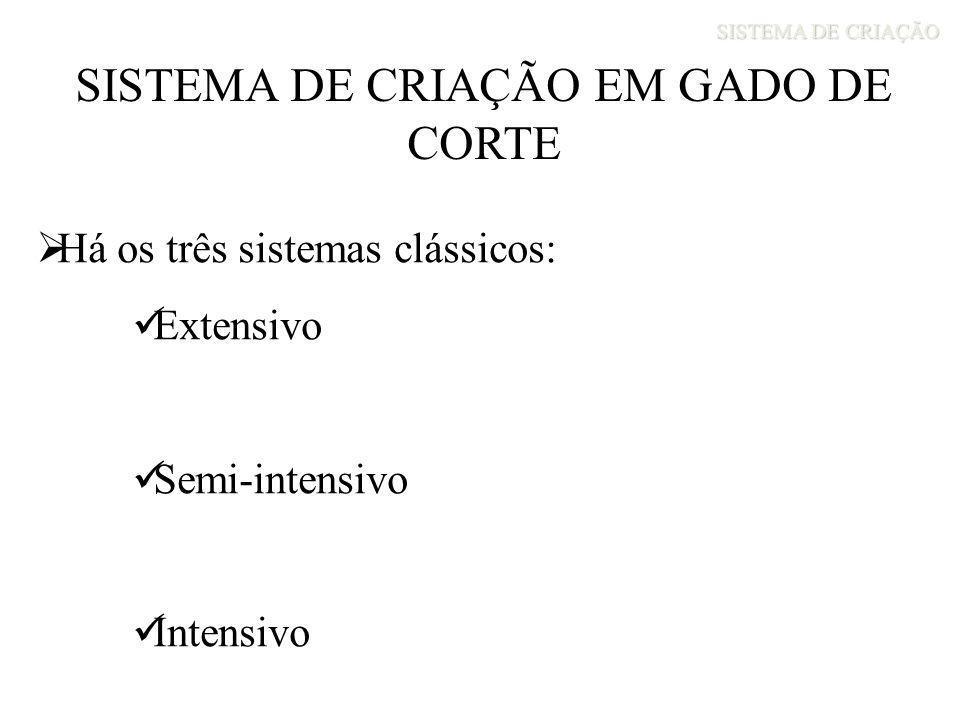 SISTEMA DE CRIAÇÃO EM GADO DE CORTE