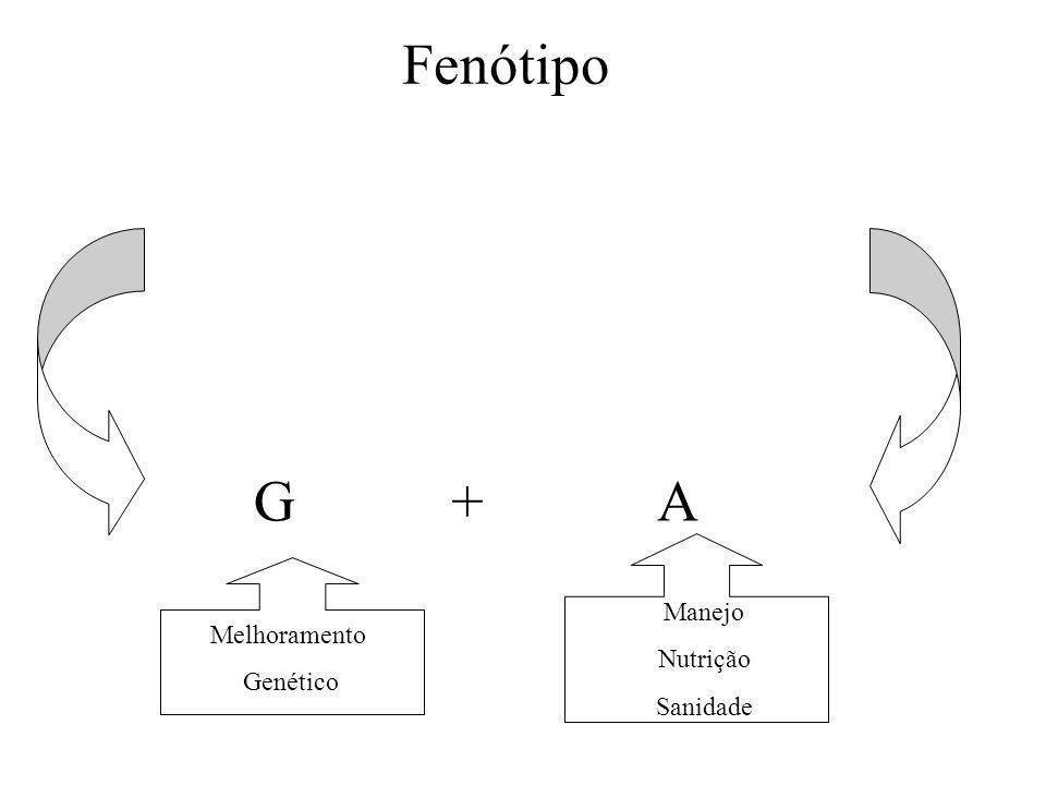 Fenótipo G + A Manejo Nutrição Sanidade Melhoramento Genético