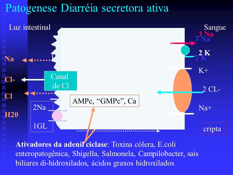 Patogenese Diarréia secretora ativa