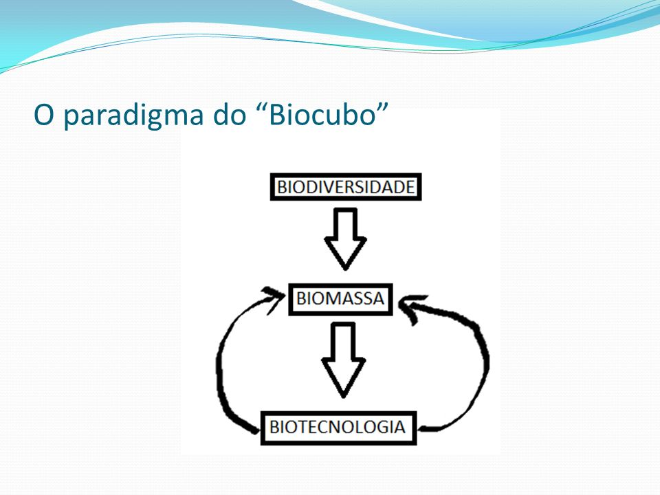 O paradigma do Biocubo