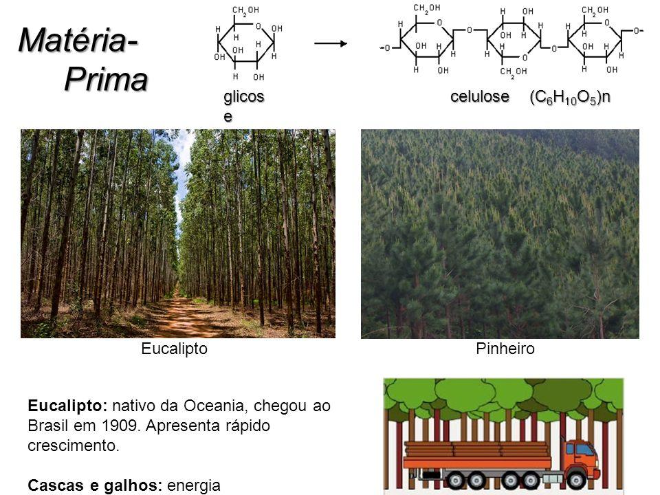 Matéria- Prima glicose celulose (C6H10O5)n Eucalipto Pinheiro