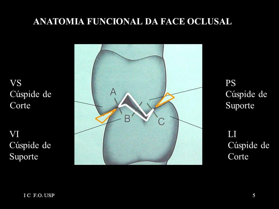 ANATOMIA FUNCIONAL DA FACE OCLUSAL