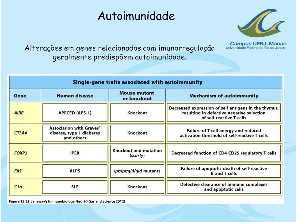 Autoimunidade Alterações em genes relacionados com imunorregulação geralmente predispõem autoimunidade.