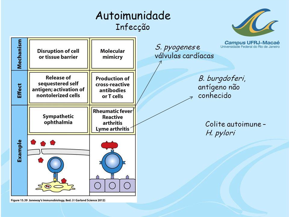 Autoimunidade Infecção S. pyogenes e válvulas cardíacas