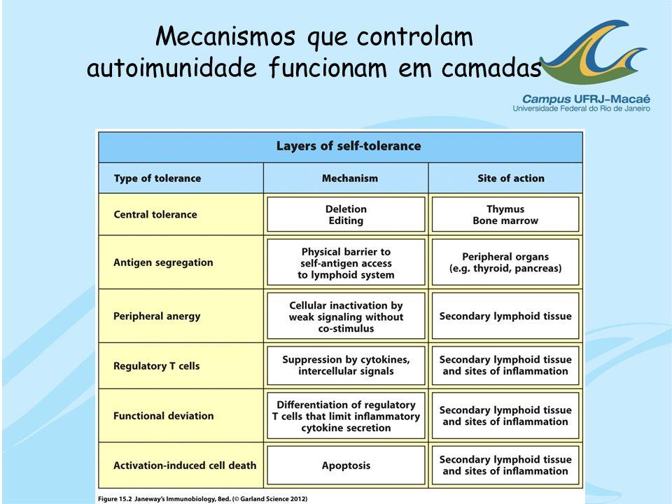 Mecanismos que controlam autoimunidade funcionam em camadas