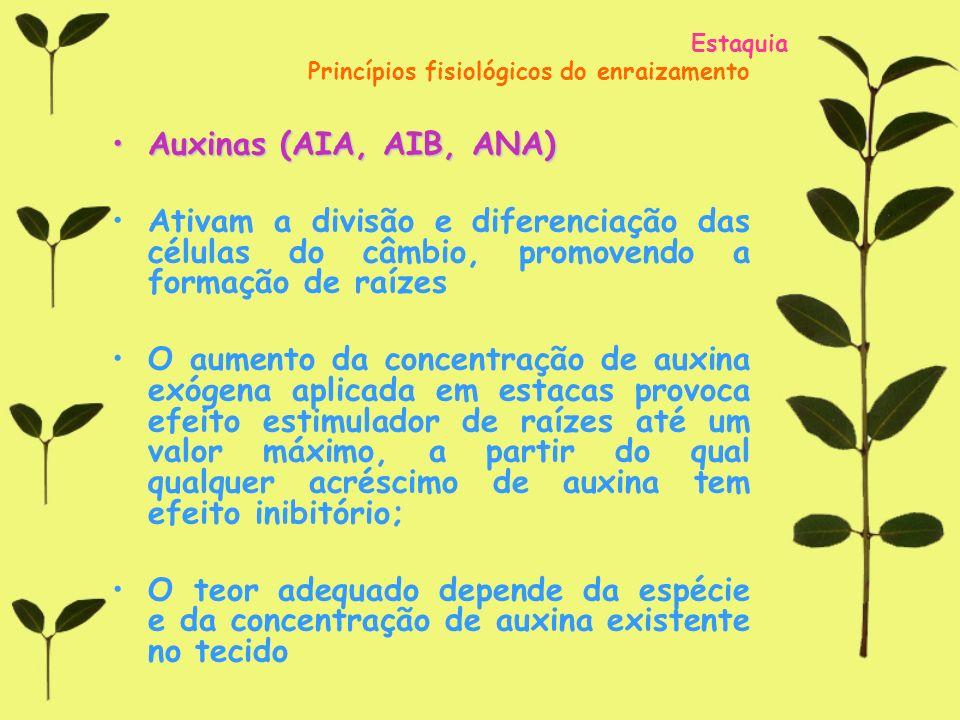 Estaquia Princípios fisiológicos do enraizamento. Auxinas (AIA, AIB, ANA)