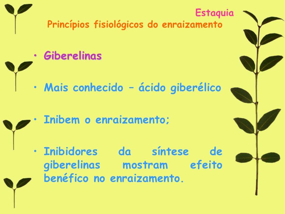 Mais conhecido – ácido giberélico Inibem o enraizamento;