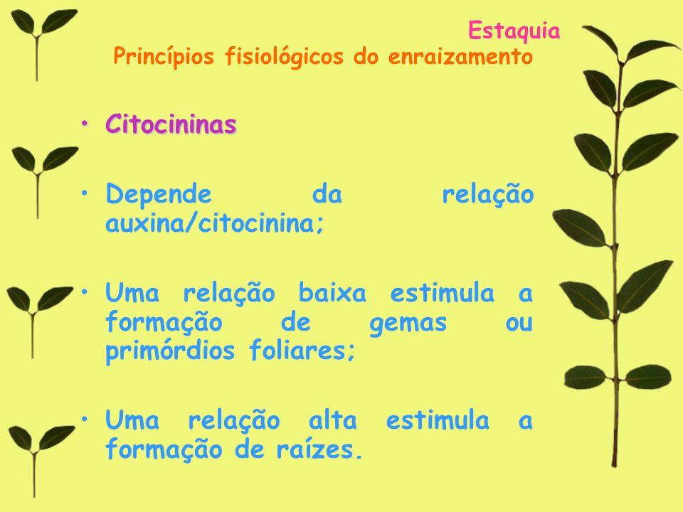Depende da relação auxina/citocinina;