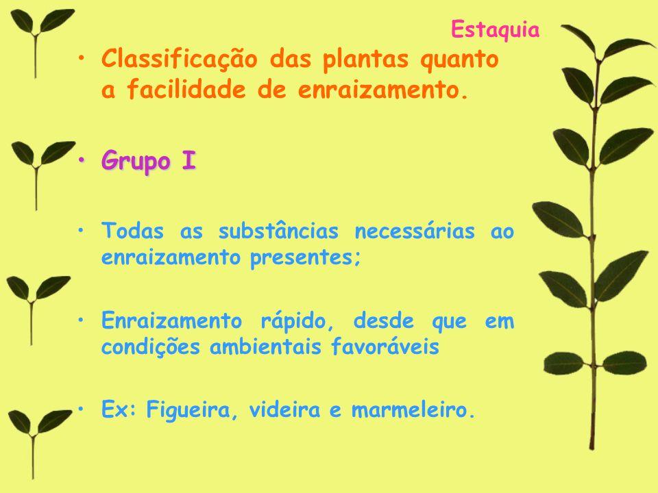 Classificação das plantas quanto a facilidade de enraizamento.