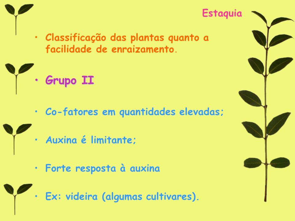 Estaquia Classificação das plantas quanto a facilidade de enraizamento. Grupo II. Co-fatores em quantidades elevadas;