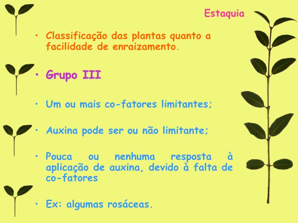 Estaquia Classificação das plantas quanto a facilidade de enraizamento. Grupo III. Um ou mais co-fatores limitantes;