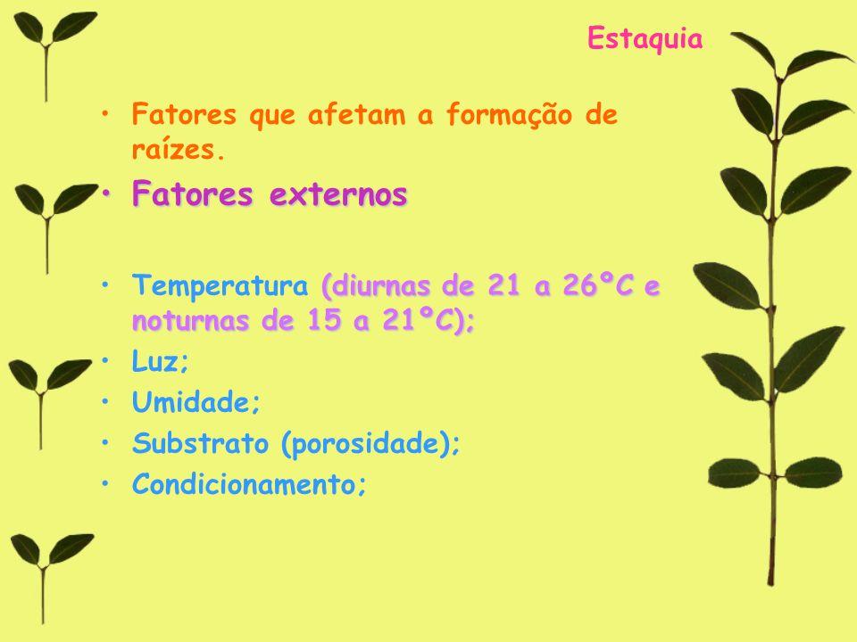Fatores externos Estaquia Fatores que afetam a formação de raízes.