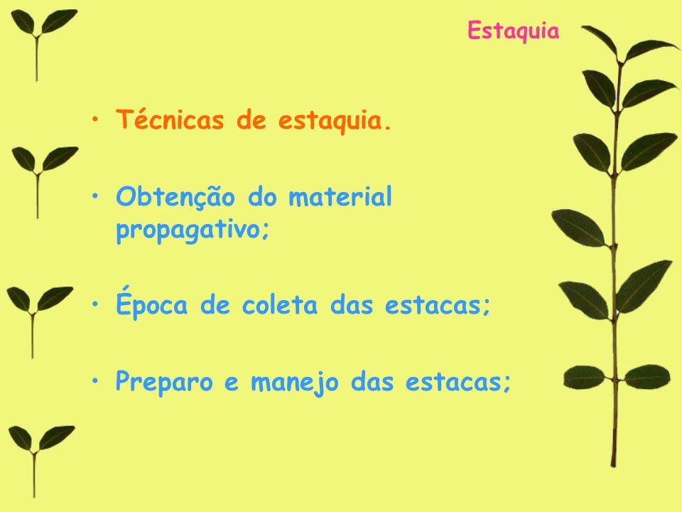 Obtenção do material propagativo;