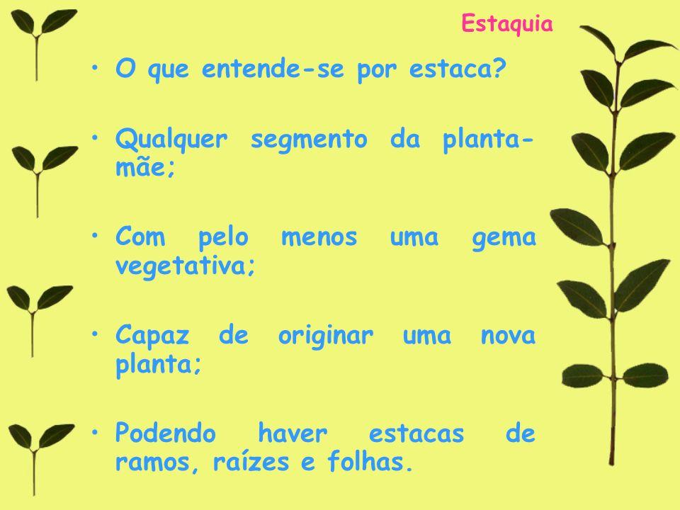 O que entende-se por estaca Qualquer segmento da planta-mãe;