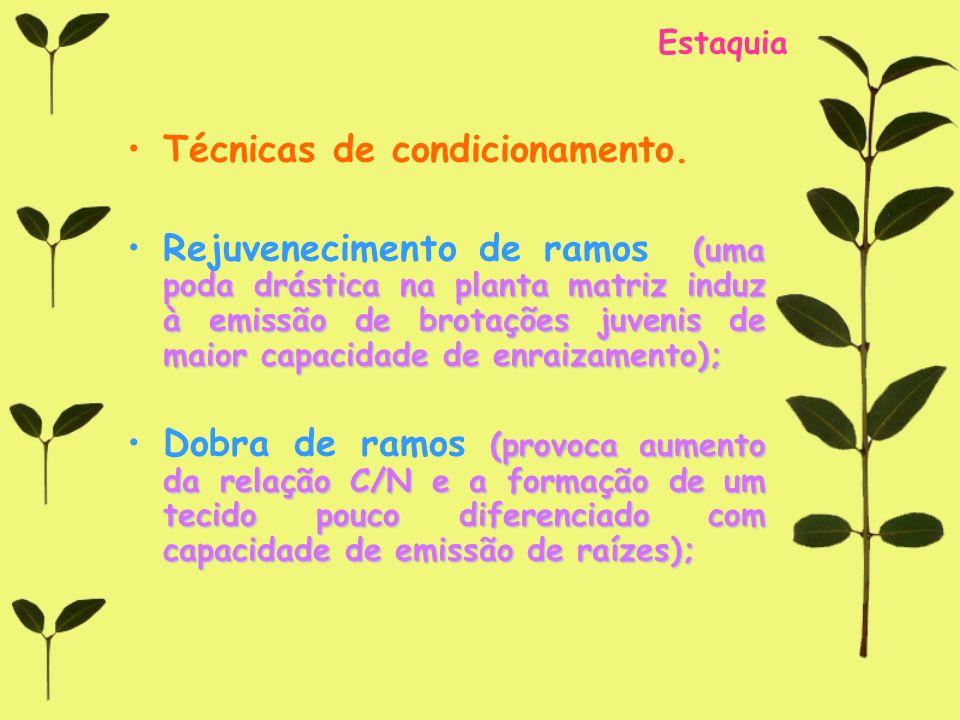 Técnicas de condicionamento.