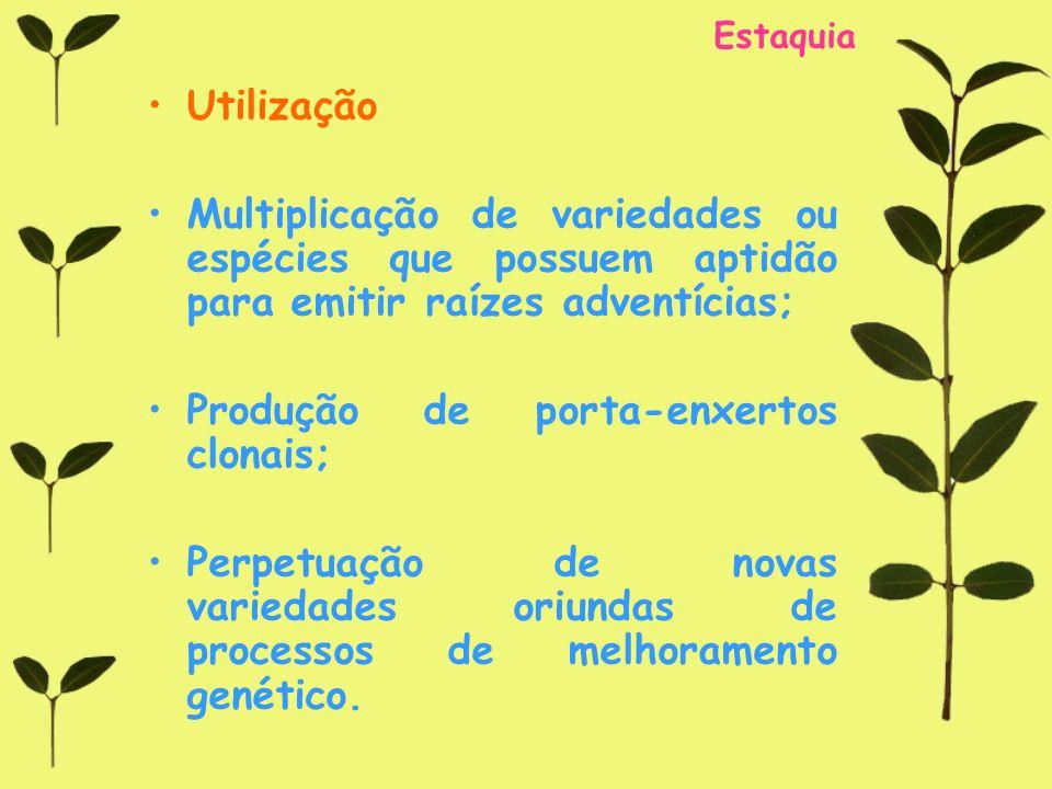 Produção de porta-enxertos clonais;