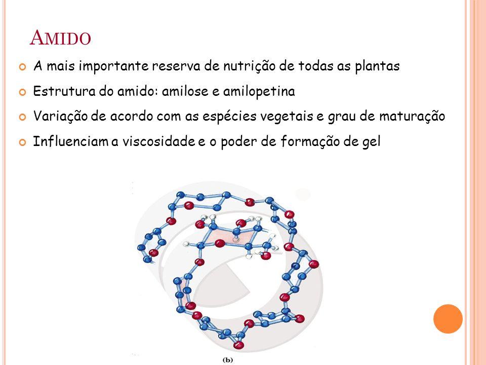 Amido A mais importante reserva de nutrição de todas as plantas