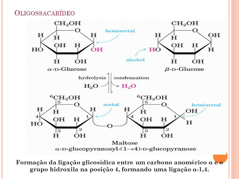 Oligossacarídeo Formação da ligação glicosídica entre um carbono anomérico α e o grupo hidroxila na posição 4, formando uma ligação α-1,4.