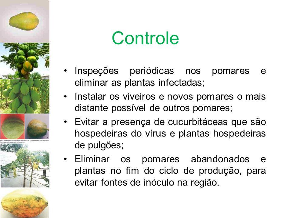 Controle Inspeções periódicas nos pomares e eliminar as plantas infectadas;