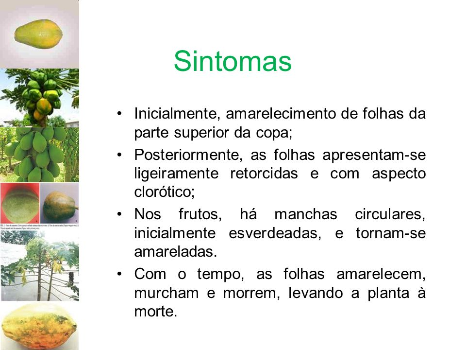 SintomasInicialmente, amarelecimento de folhas da parte superior da copa;