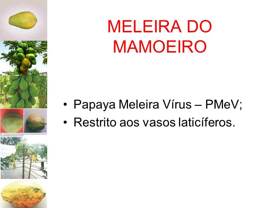 MELEIRA DO MAMOEIRO Papaya Meleira Vírus – PMeV;