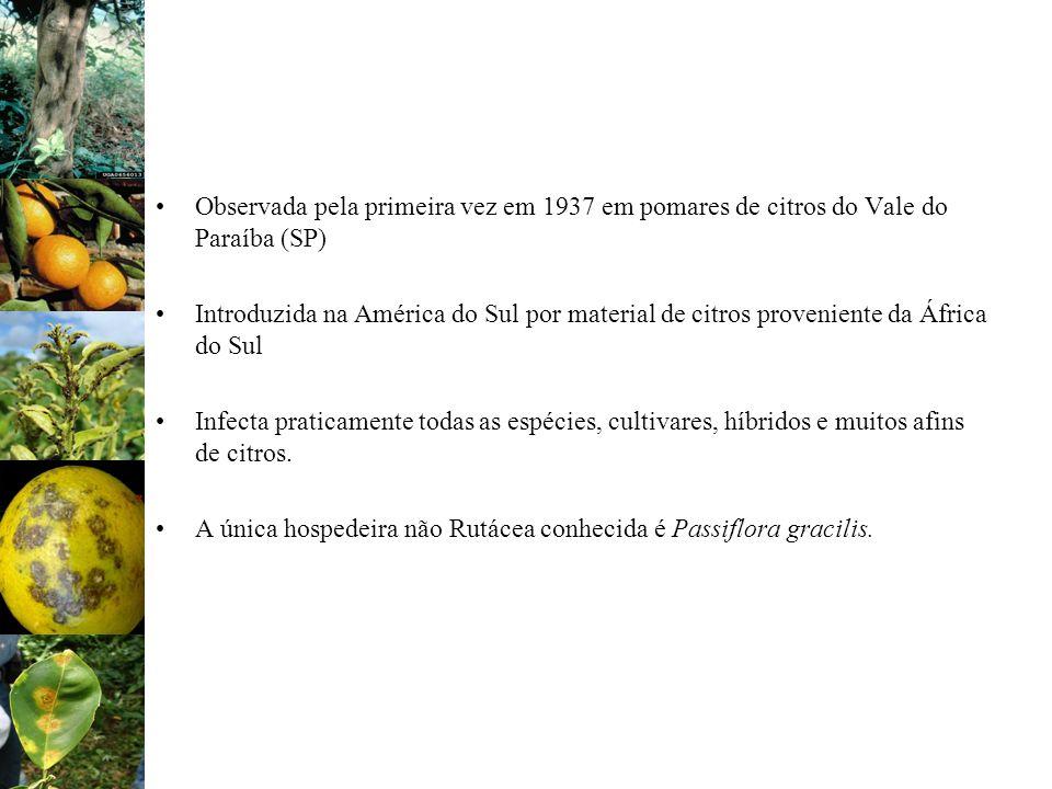 Observada pela primeira vez em 1937 em pomares de citros do Vale do Paraíba (SP)