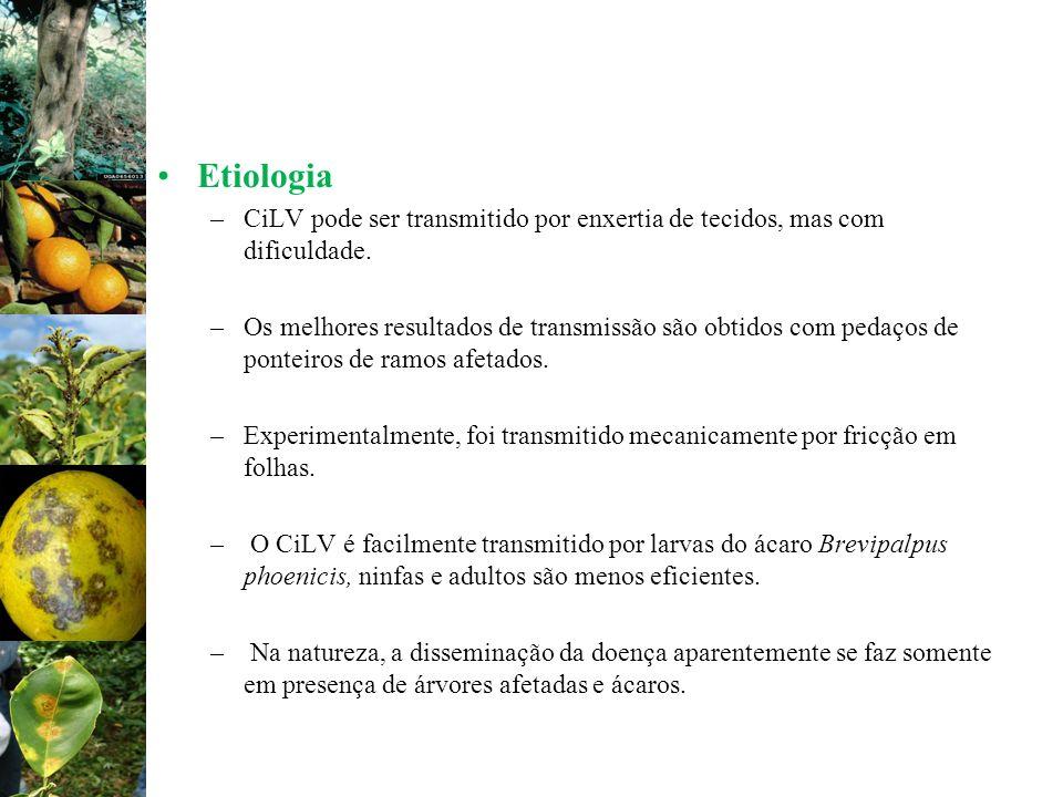 EtiologiaCiLV pode ser transmitido por enxertia de tecidos, mas com dificuldade.
