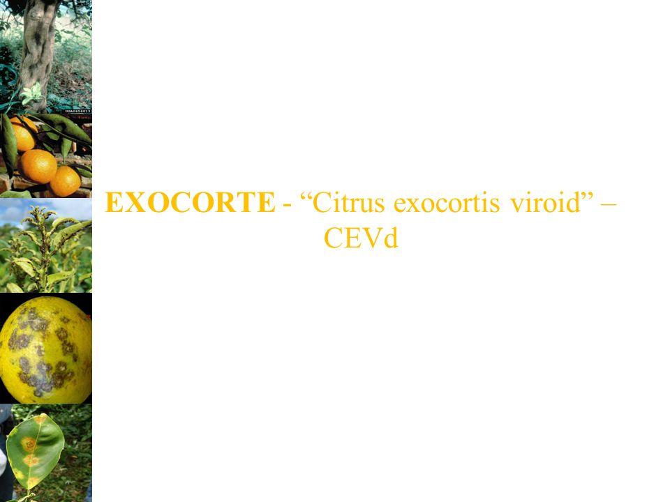 EXOCORTE - Citrus exocortis viroid – CEVd