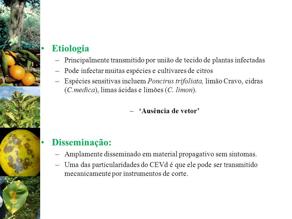 Etiologia Disseminação: