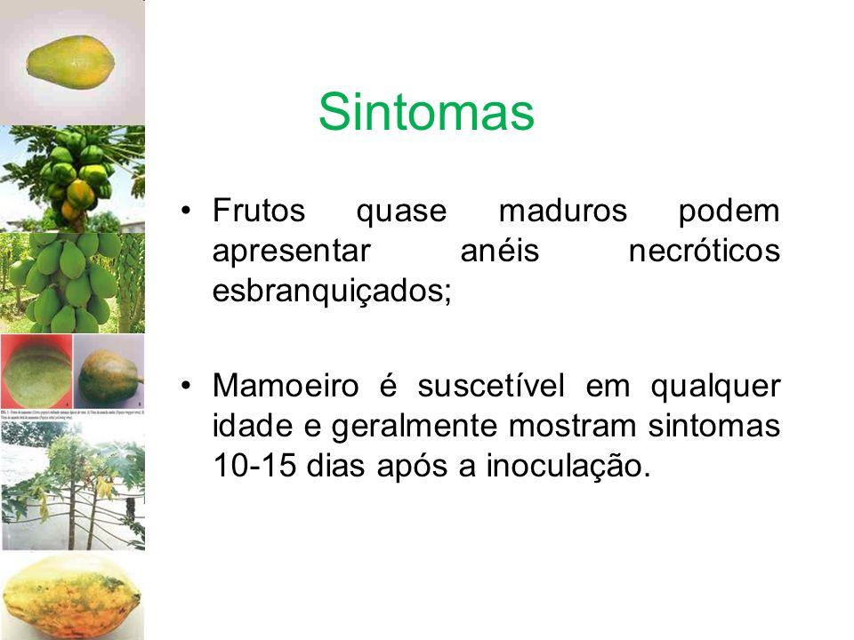 Sintomas Frutos quase maduros podem apresentar anéis necróticos esbranquiçados;