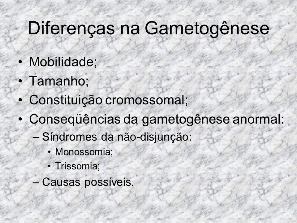 Diferenças na Gametogênese