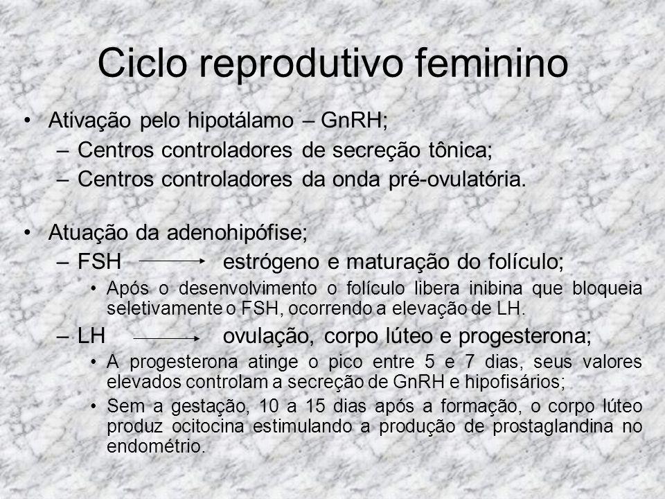 Ciclo reprodutivo feminino