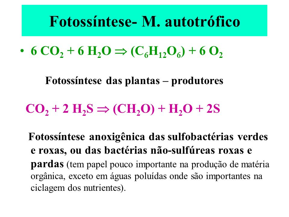 Fotossíntese- M. autotrófico