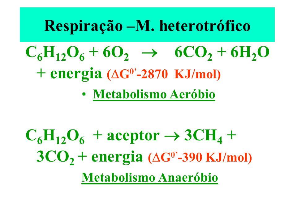 Respiração –M. heterotrófico